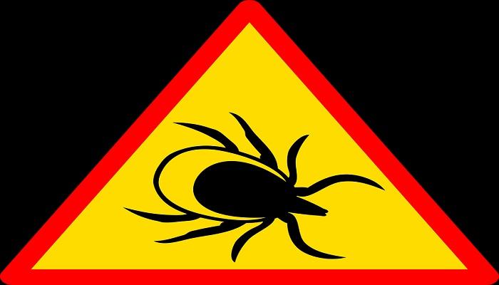 Qué es la enfermedad de Lyme y cómo actuar ante la picadura de una garrapata